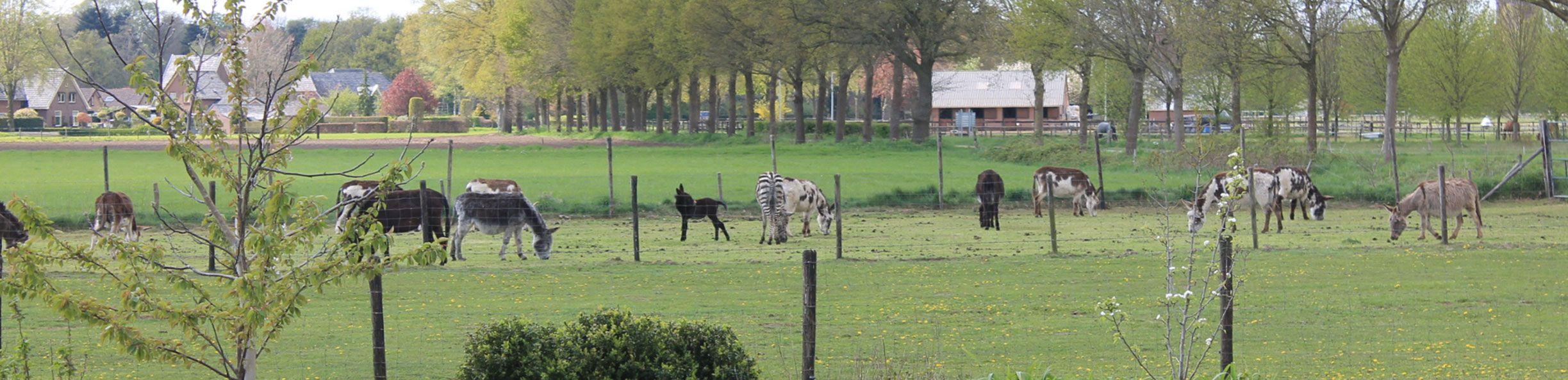 http://www.demettemaat.nl/uploads/images/header/lenteuitzicht.jpg